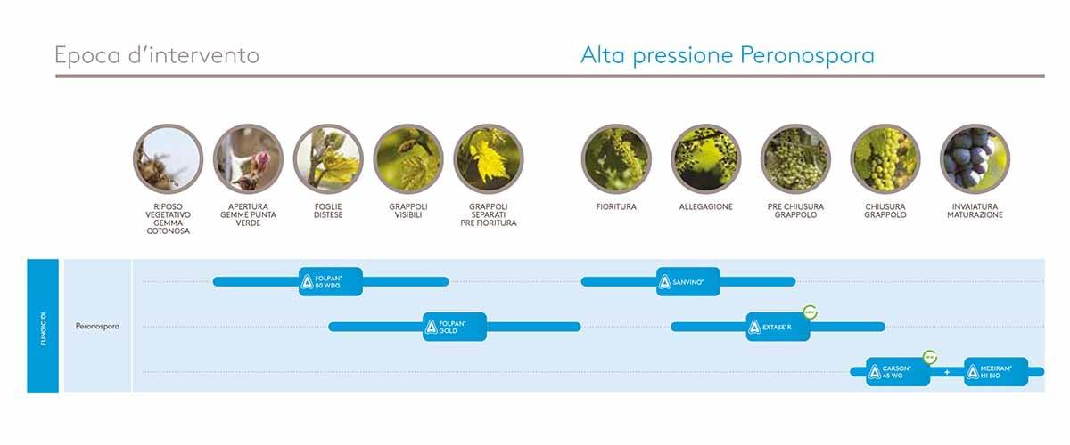 Alta Pressione Peronospora Vite