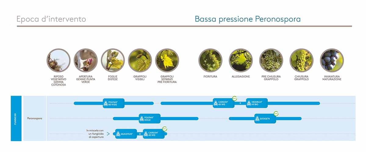 Bassa pressione peronospora vite