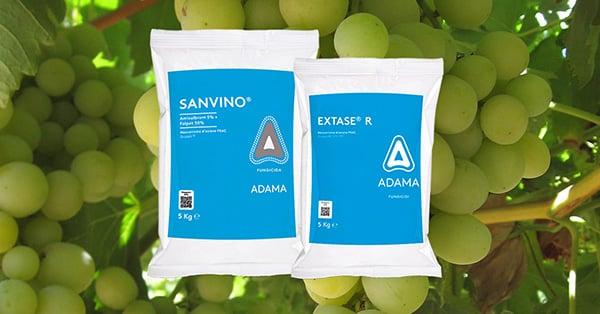 SANVINO_EXTASER_Adama