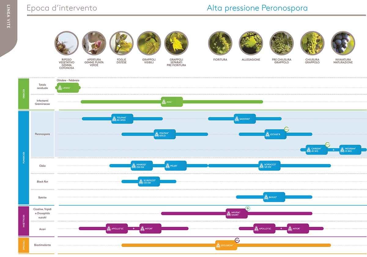 alta pressione peronospora vite-1