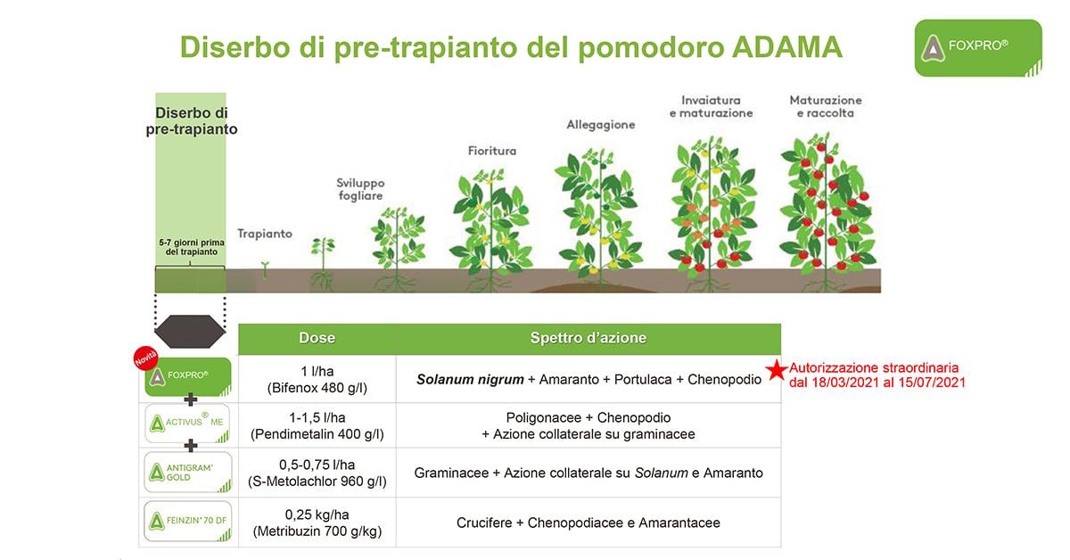 coltivazione del pomodoro diserbo pre trapianto