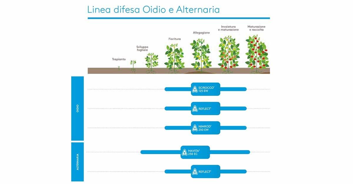 linea tecnica oidio alternaria pomodoro