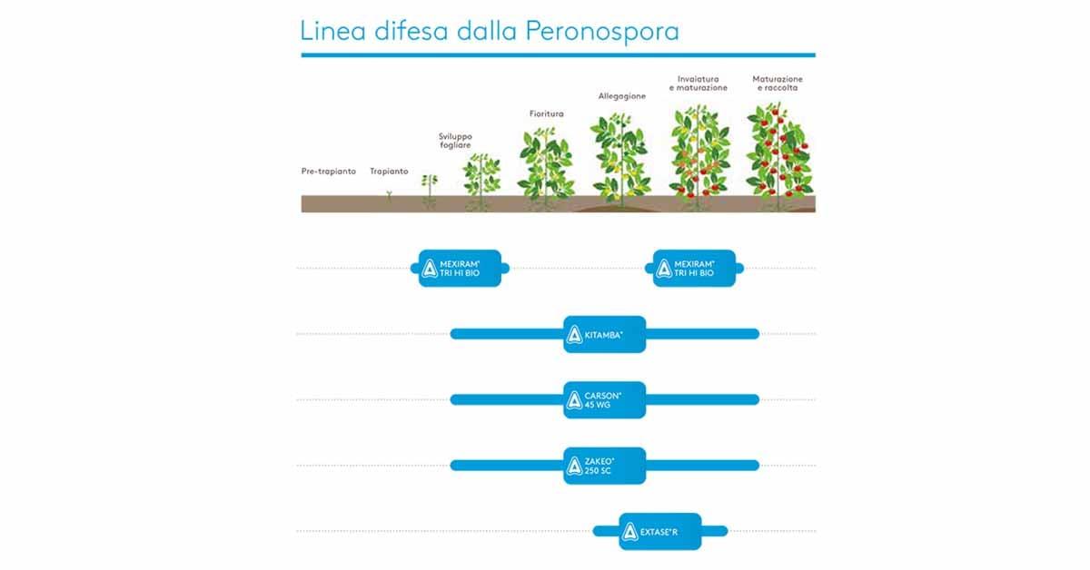 linea tecnica peronospora pomodoro