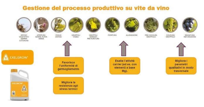 processo produttivo su vite da vino