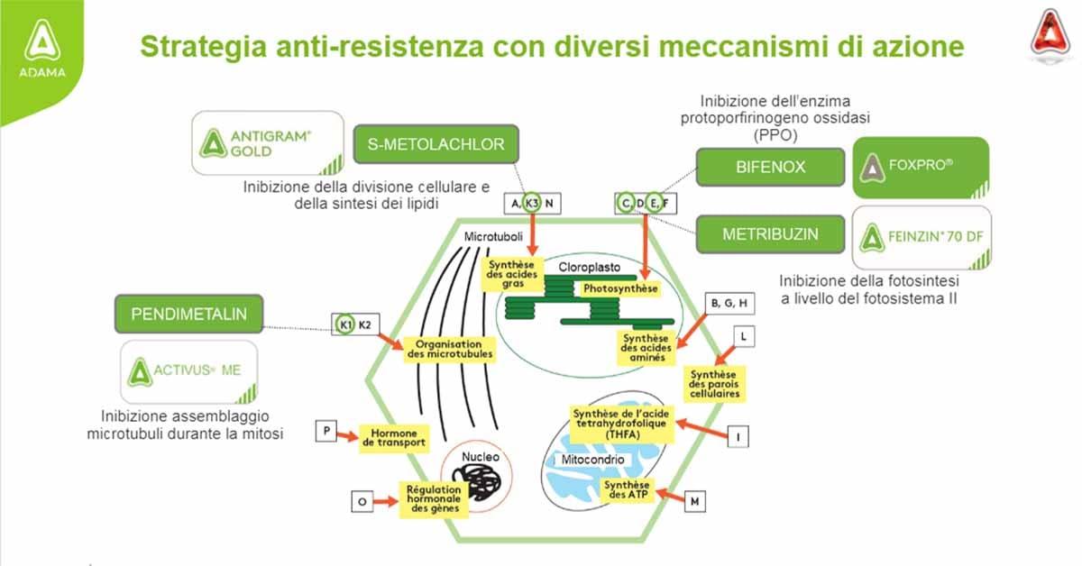 strategia anti-resistenza pomodoro