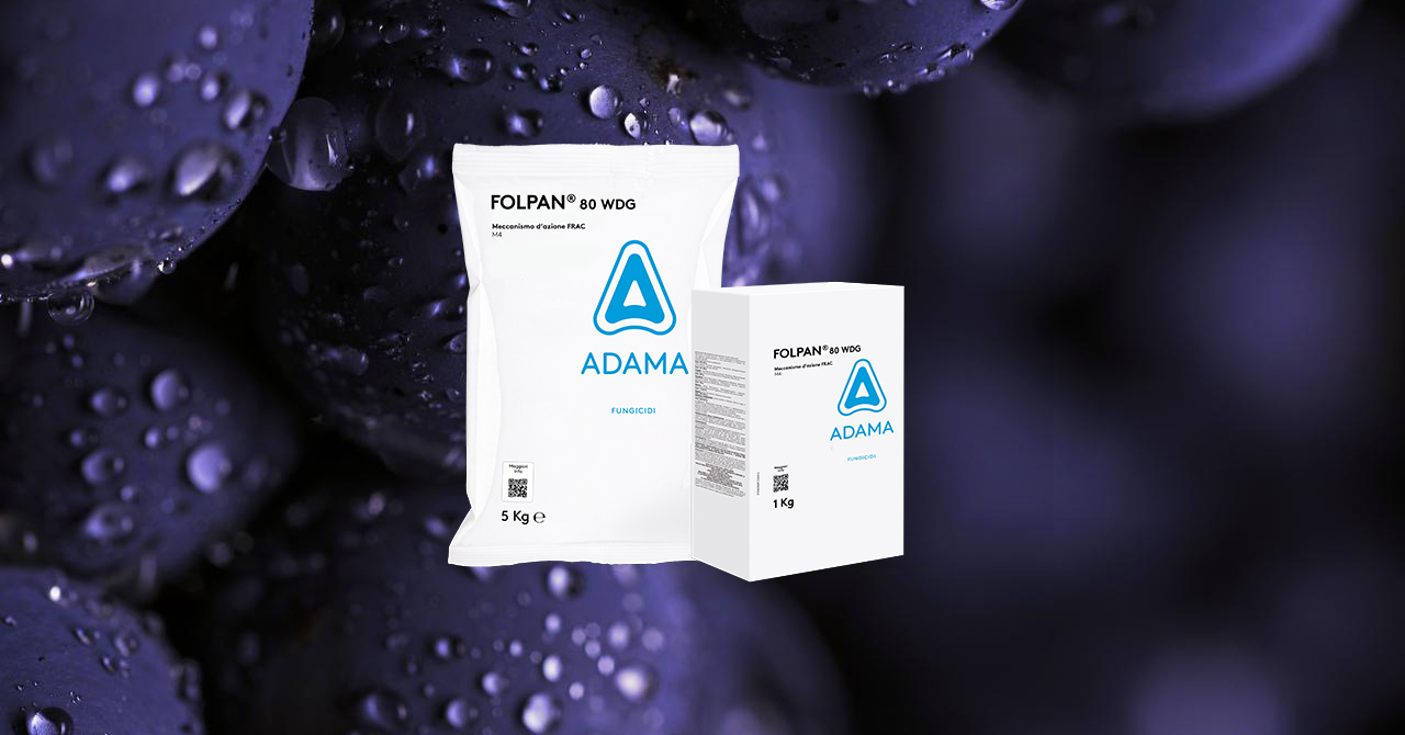 FOLPAN 80 WDG, il fungicida ADAMA contro la peronospora della vite