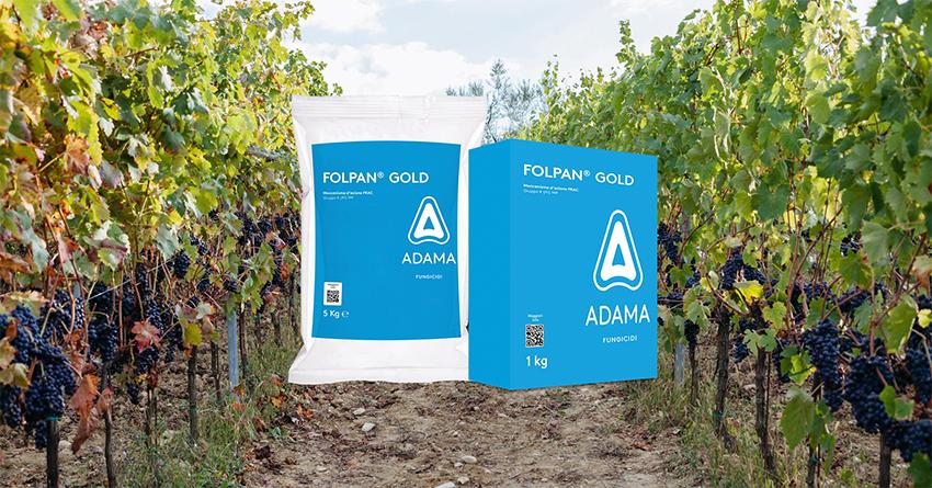 Linea Folpet di ADAMA per la vite: scopriamo FOLPAN GOLD