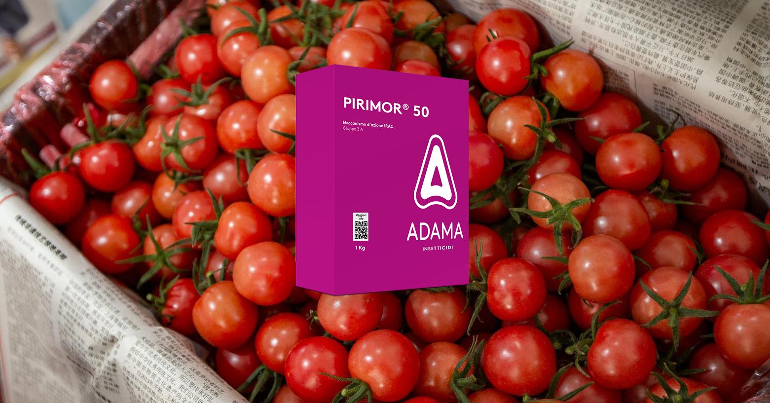 Gli afidi del pomodoro: combatterli con PIRIMOR® 50 di ADAMA