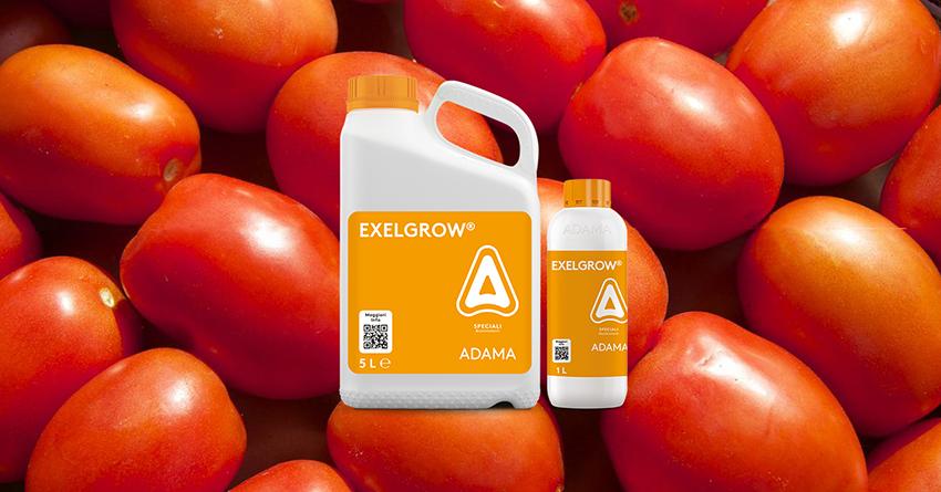 Proteggere il pomodoro dall'alternaria: scopri REFLECT di ADAMA