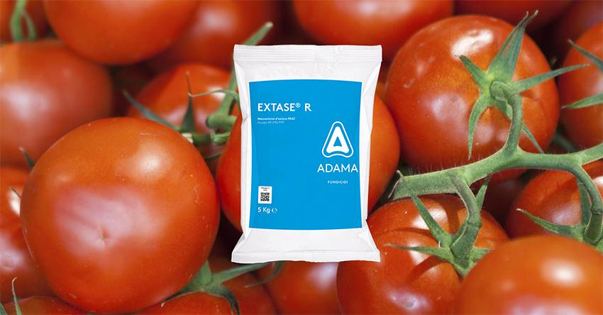 Peronospora del pomodoro: la novità EXTASE R di ADAMA