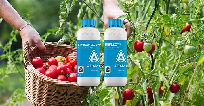 Controllare l'oidio del Pomodoro con i fungicidi NIMROD e REFLECT_Adama